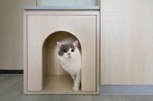 вход в кошачий туалет