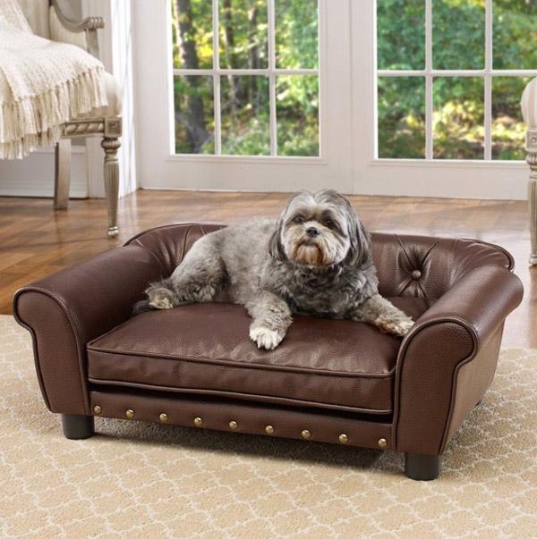 собачка на диване