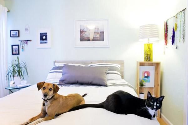 домашние животные спят на кровати
