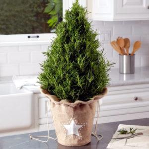 елка в горшке для декоративных целей